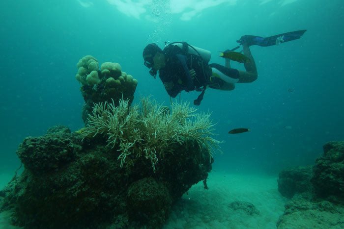 Floating above the corals